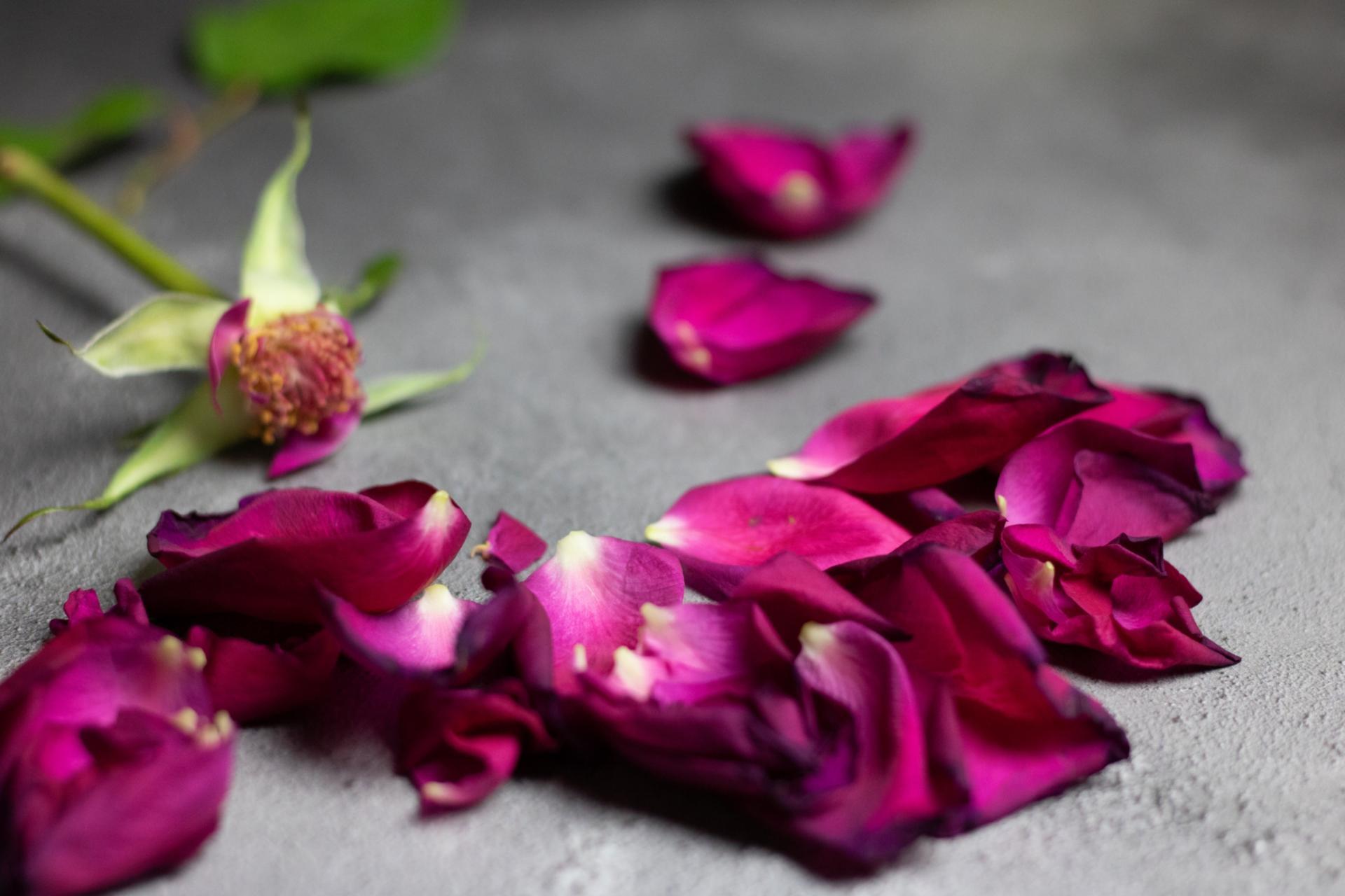Blume (c) www.pixabay.com