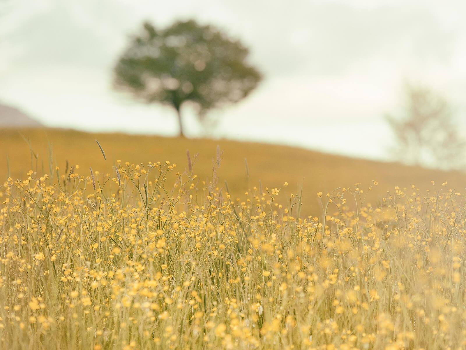 Baum auf der blühenden Wiese (c) CC0 1.0 - Public Domain (von unsplash.com)